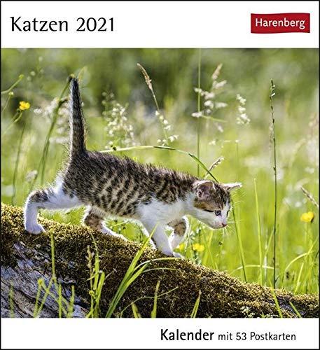 Katzen Postkartenkalender 2021 - Tischkalender mit Wochenkalendarium - 53 perforierte Postkarten zum Heraustrennen - zum Aufstellen oder Aufhängen - Format 12 x 15 cm: Kalender mit 53 Postkarten