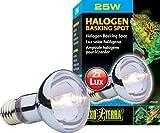 Hagen Terra Sun-Glo Daylight Halogen Lamp 25W