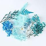 Misto di fiori secchi misti, blu Dried Flowers, mazzo di fiori secchi piccoli, per fai da te, in resina, per realizzare candele, scrapbooking