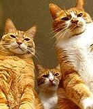 shuodade Dipinti per Numero Kit Tre Animali Gatto Arancione Vernici per Numeri per Adulti e Bambini Fai da Te Kit Regalo Pittura ad Olio