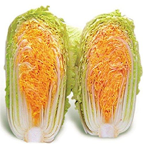 Bouteille CFIL vert bio Gourd Graines de légumes, emballage d'origine, 10 / Pack, Graines savoureux légumes chinois C108
