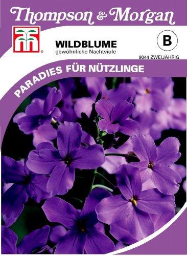 Thompson & Morgan AGT09044 Wildblume Gewöhnliche Nachtviole (Wildblumensamen)