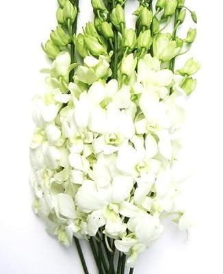Fresh Cut Flowers - Dendrobium Orchids White by Eflowerwholesale