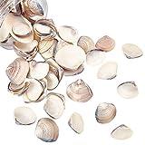NBEADS Alrededor de 300 g de cuentas de concha natural sin perforar cuentas de concha de mar de playa, abalorios para manualidades de verano, para manualidades, bodas, fiestas, decoracin del hogar