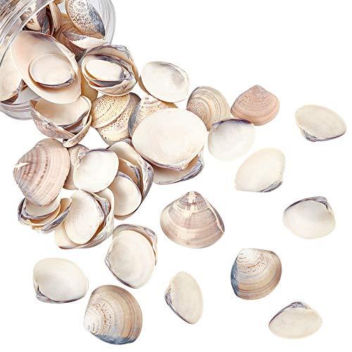 NBEADS Alrededor de 300 g de cuentas de concha natural sin perforar...