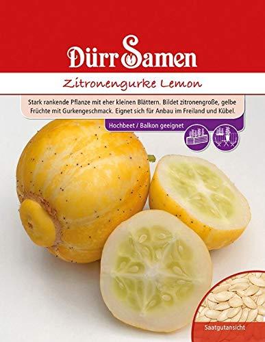 Zitronengurke Lemon, eine stark rankende Pflanze, bildet zitronengroße gelbe Früchte mit Gurkengeschmack