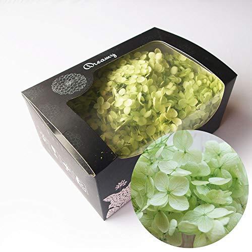 アジサイ・ヘッド緑 約20g プリザーブドフラワー グリーン(e) 花材 レジン パーツ クラフト あじさい 緑 アクセサリー ハーバリウム用
