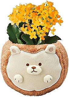 花のギフト社 カランコエ 花鉢 鉢植え フラワーギフト お花 ハリネズミ 花 プレゼント