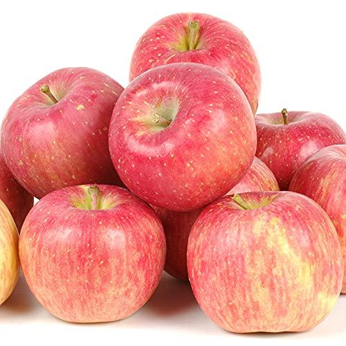 国華園 りんご 青森産 サンつがる(10kg)24〜50玉 ご家庭用 早生品種 林檎 果物 フルーツ