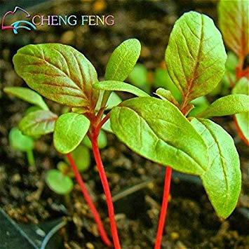 VISTARIC Deep Blue: Verkauf 100 / bag Jamaican Callaloo Samen Amaranth Samen Seltene Erbstück geernteten Pflanzen für Haus Garten Mini Bonsai Watch & Essbare