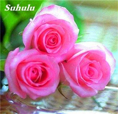 De nouvelles semences 2017! 24 Couleurs Rose Graines Plantes vivaces Rose pot de fleurs Graines cour et balcon extérieur Plant-150 Pcs 2