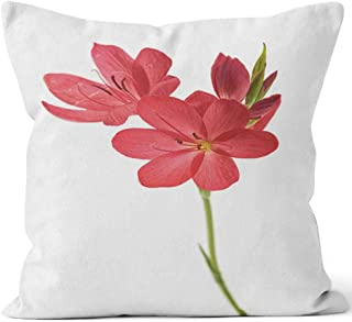 Nine City Bunch of Kaffir Lilies Isolated on White Throw Pillow Cushion Cover,HD Printing Decorative Square Accent Pillow Case,40