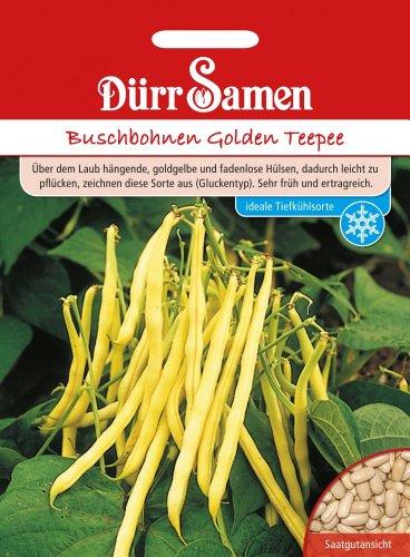 Dürr Samen 0331 Buschbohne Golden Teepee (Buschbohnensamen)