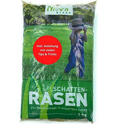 Premium Schattenrasen Rasensamen schnellkeimend für den Herbst 1kg = 30m² | dürreresistent, robust, tiefgrün | Ideal für Rasen Reparatur, Rasen Nachsaat, Neuansaat