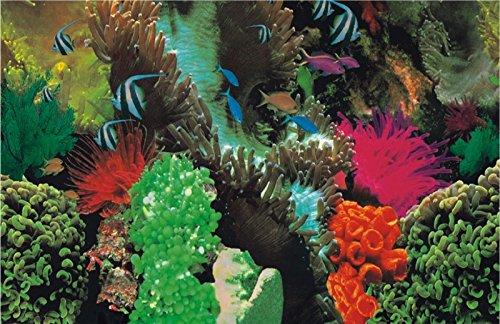 Marty KB05 1311 dubbelzijdig behang - zee/koraal, 49 cm