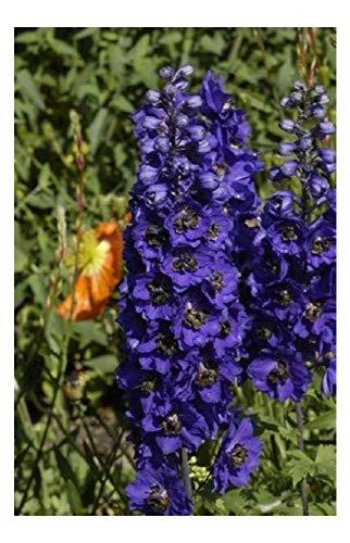 """Premier Semi diretto DEL02F Delphinium """"serie Fontana Magica"""" blu scuro con semi Bianco Bee (pacchetto di 50)"""