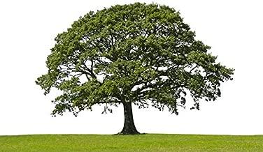 Lone Oak Tree Photography A-91523 (24x16 Gallery Quality Metal Art)