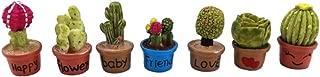 dollhouse cactus