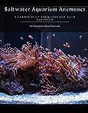 Saltwater Aquarium Anemones: 8 VARIETIES OF ANEMONES FOR YOUR AQUARIUM