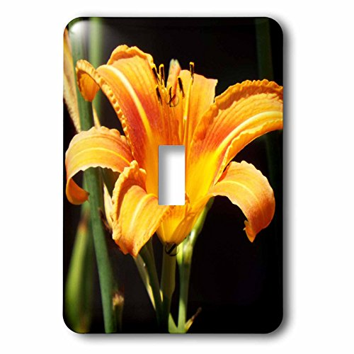 3dRose lsp_269423_1 Beautiful Orange Tiger Lily Toggle Switch, Multicolor