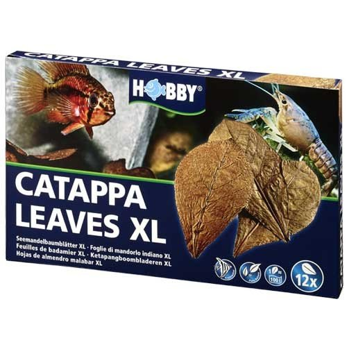 Catappa Leaves Lot de 12 feuilles de badamier XL