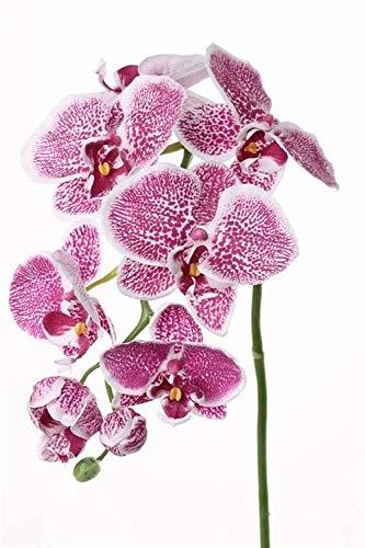 artplants.de Künstlicher Phalaenopsis - Zweig CEDRA, weiß - rosa, 75cm - Kunstblumen - Deko Orchidee