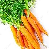 100pcs semillas de zanahoria gigante ruso de la herencia orgánica Vegetable Seeds para plantas del jardín de dulce y sano de la fruta de la semilla vegetal púrpura
