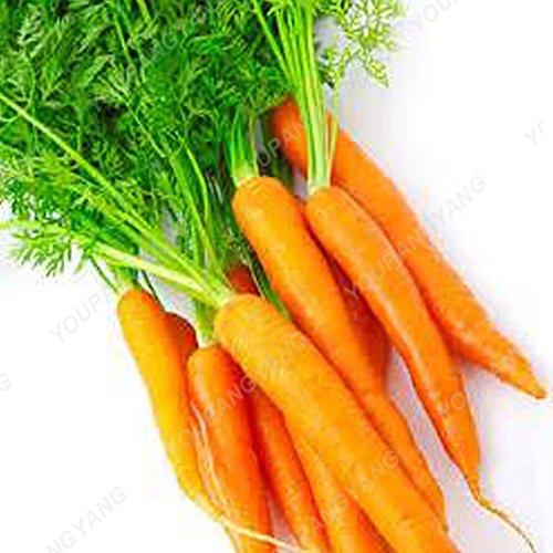 200pcs pourpre graines de carotte arc-en-Anti-âge ginseng bonsaï plantes en bonne santé sucre biologique semences potagères pour jardin Violet