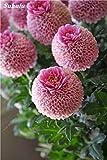 Las semillas de la planta creativa de belleza Jardín 100 piezas de cebolla Allium gigante Giganteum semilla de flor perenne de flores Bonsai Planta del jardín de DIY 8