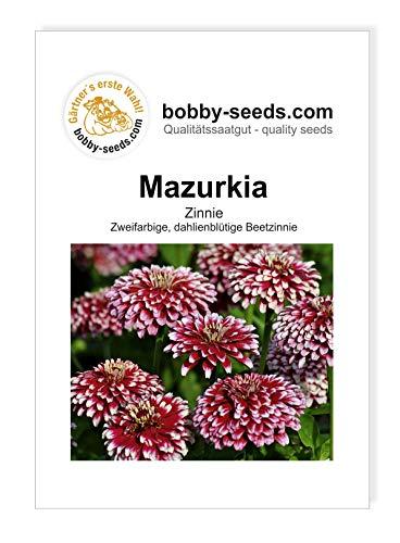 Mazurkia Zinnien Samen von Bobby-Seeds Portion