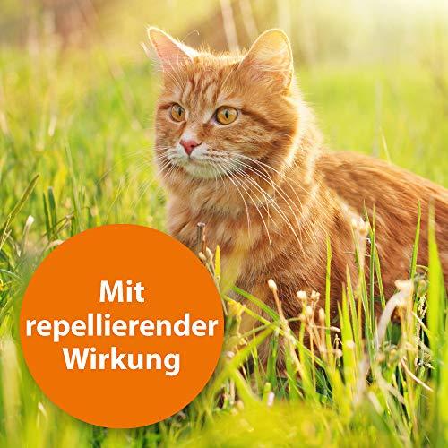 Quiko 077360 Ardap Spot on  Zecken und Flohschutz für große Katzen, 4 – 8 kg - 5