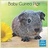 Baby Guinea Pigs 2022 Calendar: Official Guinea Pigs Rodents Calendar 2022, 16 Month Square Calendar