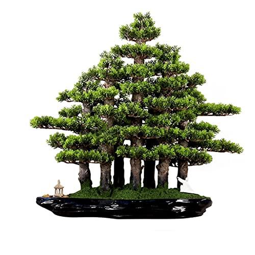 Tingting1992 Bonzai bäume/Topf Pflanze...