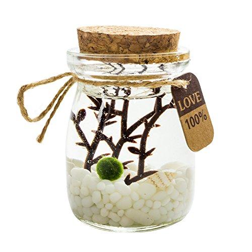 OMEM K - Kit per acquario in vetro con pallina di marimo (aegagropila linnaei)