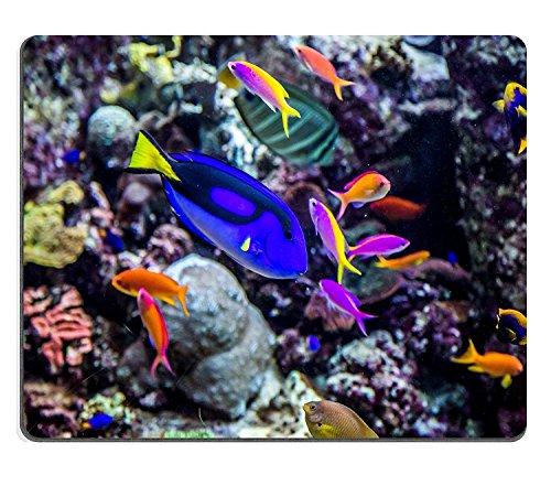 luxlady Gaming Mousepad Bild-ID: 18796417Foto von einer tropischen Fisch auf einer Coral Reef in Dubai Aquarium
