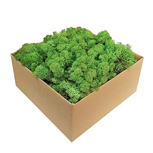 GJS Islandmoos - Moos in 1kg / 500g / 200g, versch. Farben - Echtes konserviertes Natur-Moos (Island) zum Basteln, Dekomoos für die Deko zu Ostern, Modellbau (waldgrün, 1)