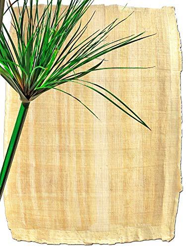 Forum Traiani Papyrus Blatt 21x16cm, Naturrand, echtes Papyri, handgelegtes Papyrus Papier, Papyrus-Rolle aus Ägypten, Unterrichtsmaterial Geschichte Naturprodukt