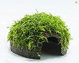 Garnelio - Moos Höhle/Coco Shell - Kokosnuss mit Xmas Aquarienmoos bewachsen/Höhle Aquarium Deko