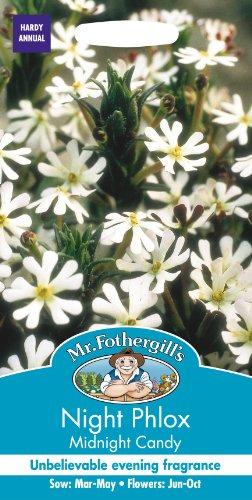 Mr Fothergills Pilzsporen, Blume Nachtphlox Midnight Candy 250 Samen