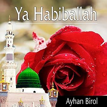 Ya Habiballah