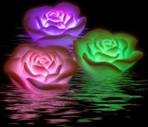Schwimmlichter Floating Rose Spa Lights - 3er Set