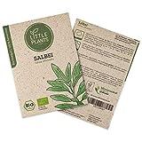 Little Plants BIO-Salbeisamen (Salvia officinalis) | BIO-Kräutersamen | Nachhaltige Verpackung aus Graspapier | Kräuter-Samen | BIO-Saatgut für ca. 50 Salbei-Pflanzen