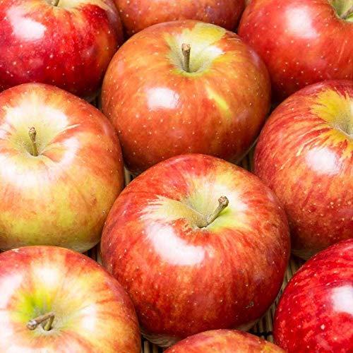 【家庭用】おすすめ青森りんご(赤) 5kg 特別栽培 (青森県 ふるさと21おすすめ) 産地直送