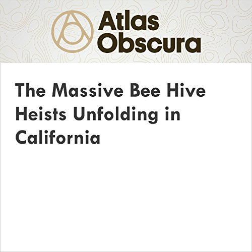 The Massive Bee Hive Heists Unfolding in California audiobook cover art