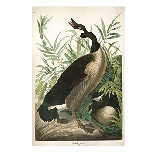 Bilderwelten Impression sur Toile - Vintage Board Canada Goose 60 x 40cm - Canvas