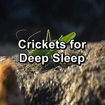Crickets for Deep Sleep