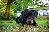 Pintura por números pintura para adultos Rottweiler negro Pet Dog Animal Canvas Art Kit DIY pintura al óleo para principiantes