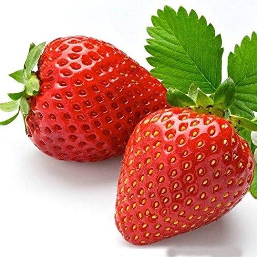 Acecoree Samen- 100pcs Bio Erdbeersamen Raritäten Obst Saatgut Erdbeer Mehrjährige Obstpflanzen Erdbeersamen für Hausgarten