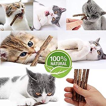 GingerUP Bâtonnets d'herbe à Chat Bio Naturel Matatabi Silvervine bâtons de friandises dentaires pour broyer Les Dents, Jouet à mâcher, Lot de 20 pièces