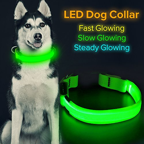 HiGuard LED Dog Collar, USB Rechargeable Glowing Pet Collar Night Safety LED Light Up with Nylon Webbing Perfect for Small, Medium, Large Dogs (Small, Green)